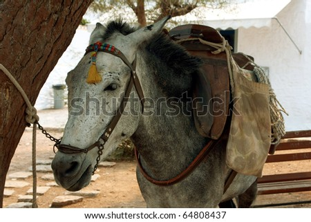 Donkey in Hydra island, Greece
