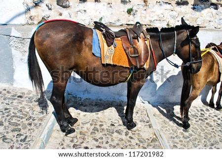 Donkey in Santorini - stock photo