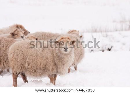 Donkey in snow - stock photo