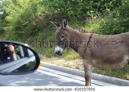Donkey on the road by the car.