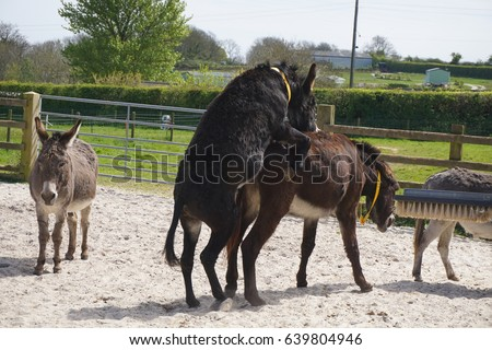 """""""mating Horses"""" Stock Images, Royalty-Free Images ..."""