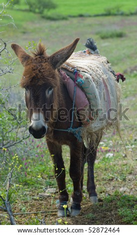 Donkey tied with a rope to a shrub in Morocco - stock photo