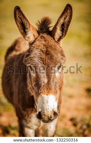 Donkey with his ears up - stock photo