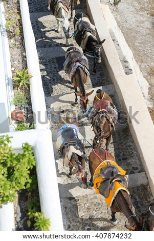 Donkeys at the Greece Santorini island are used to transport tourists in summer time - stock photo