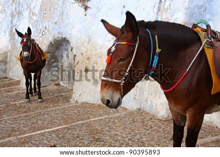 Donkeys at the Old Port, Santorini, Greece - stock photo