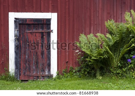 Door on old red wooden shed with green grass and ferns
