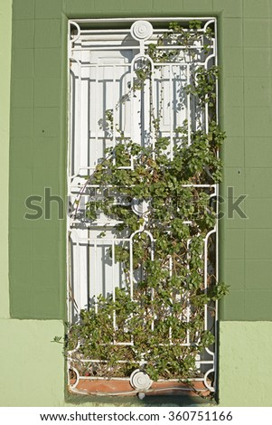 Doorway to house in Cabanyal district of Valencia, Spain. With plant growing over. - stock photo