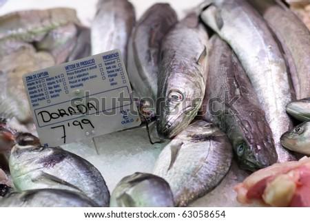 Dorada fish - stock photo