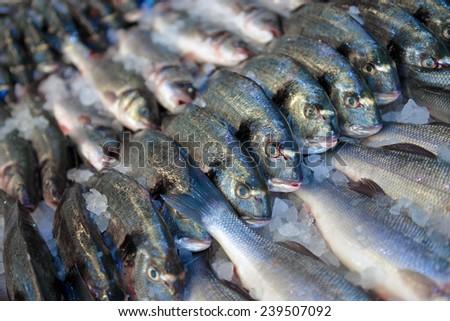 dorado and sea bass in the fish shop - stock photo