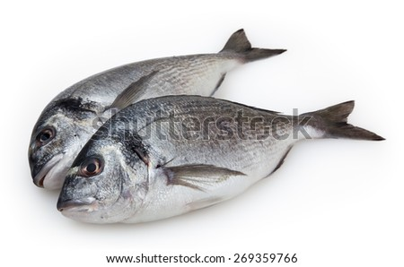 Dorado fish isolated on white background with clipping path - stock photo