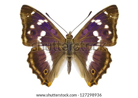 Dorsal view of Aglais iris (Purple Emperor) butterfly isolated on white background. - stock photo