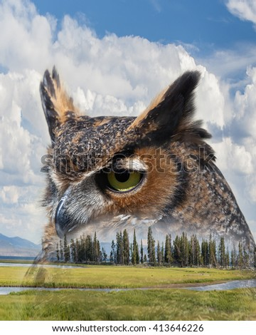 Double Exposure of Great Horned Owl and Grassy Mountain Meadow in Yellowstone National Park / Great Horned Owl and Mountain Meadow Double Exposure / Double Exposure of Great Horned Owl   - stock photo