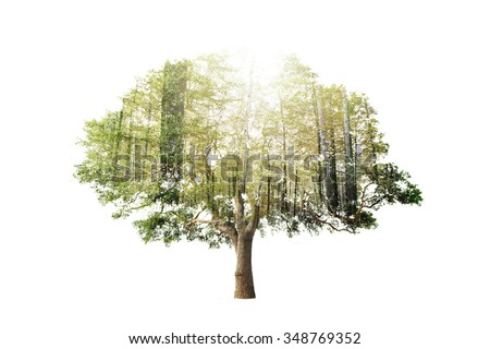 Double exposure of single tree with forest over sky background - stock photo