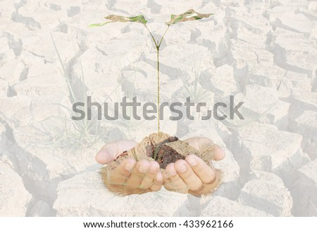 Double exposure of Trees in hands and Dryness of the forest abstract background. Ecology concept.Double exposure effects