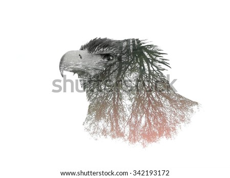 Double Exposure Portrait of Eagle and Tree Branch  - stock photo