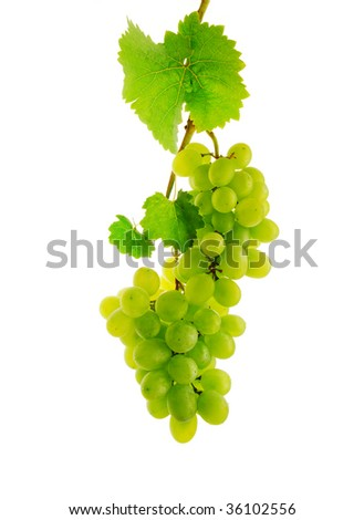Double fresh wine grape on branch with leaves, isolated - stock photo