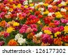 double tulips flowerbeds - stock photo