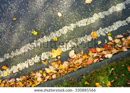 Double yellow lines covered with autumn leaves.