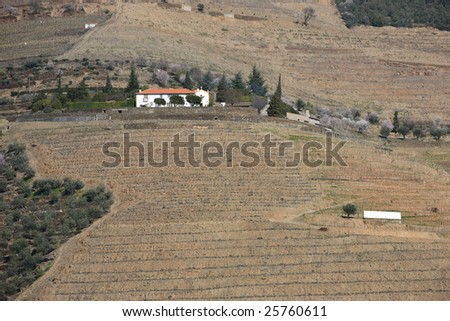 Douro landscape, with a farm with vineyards - stock photo