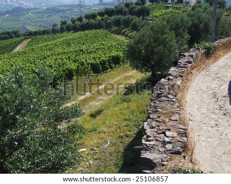 Douro landscape with vineyards, olive trees and a country road - stock photo