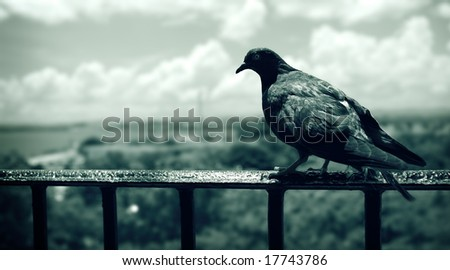 Dove - stock photo