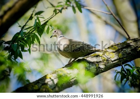 Dove at Green Tree Branch Over Blue Sky - stock photo
