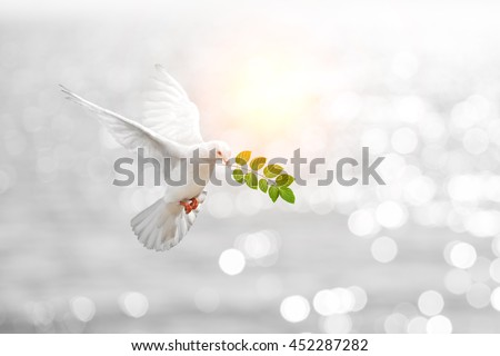 Dove carrying leaf branch and international day of peace 2016