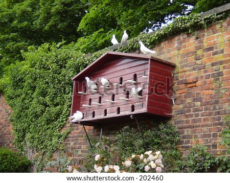 Pigeon House Stock Images Royalty Free Images Amp Vectors
