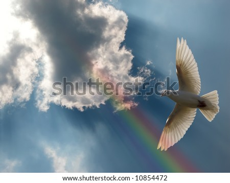 Dove Soaring in a beautiful sky with a rainbow and sunbeams. - stock photo