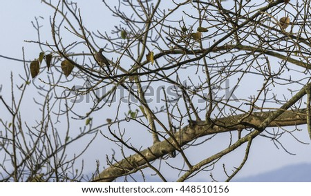Doves are perched on tree branches to blend together . - stock photo