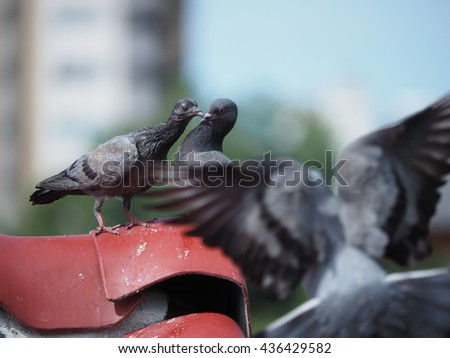 doves kissing on the top of red tile roof in bangkok city.