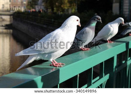 Doves on bridge - stock photo