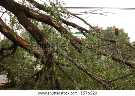 Downed Tree Blocking an Intersection, St. Louis, Missouri - stock photo