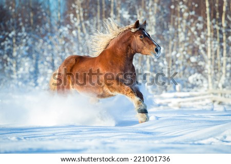 Draft horse gallops on winter background - stock photo