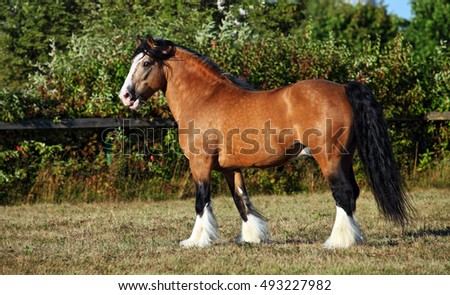 Draft horse on the meadow in evening down