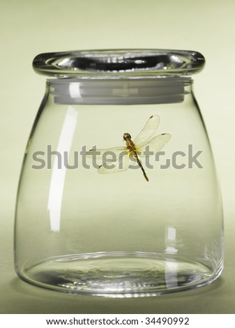 Dragon-fly in jar - stock photo