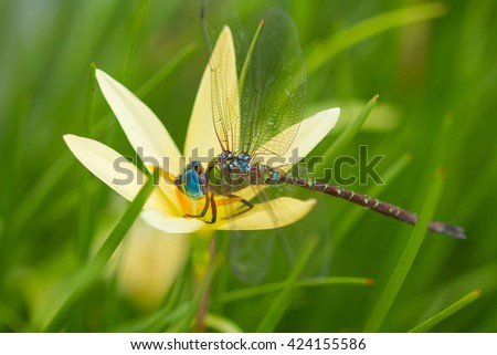 dragon fly with yellow flower