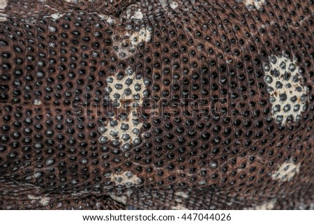 Dragon Komodo Big Lizard Texture Background - stock photo