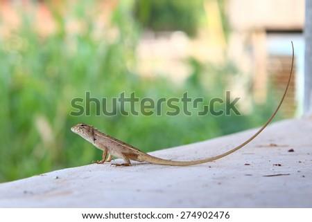 dragon on edge - stock photo