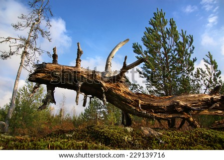 dragon shaped weathered tree, walking dino                               - stock photo