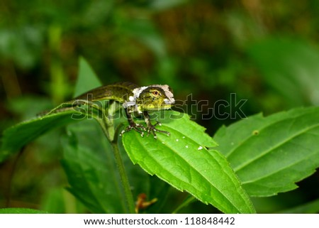 Dragon was moult on leaf. - stock photo