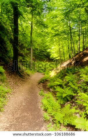 Dragoncanyon in the Thuringian Forest - stock photo