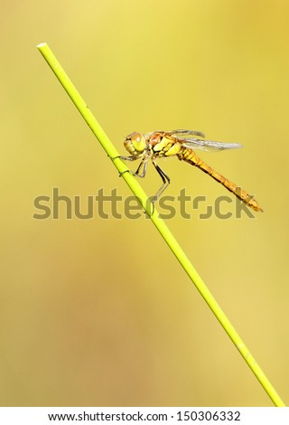 Dragonfly clinging to a blade of grass.
