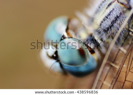 Dragonfly close up macro - stock photo