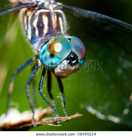 Dragonfly closeup - stock photo