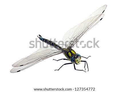 Dragonfly creeps on a white background