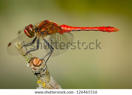 dragonfly in the summer