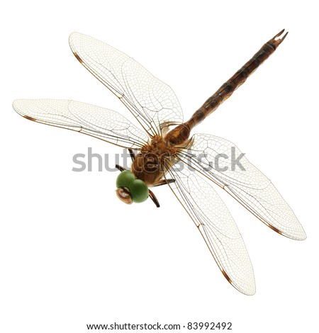 dragonfly isolated on a white background - stock photo