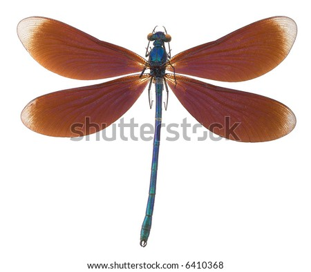 Dragonfly - isolated on white - stock photo