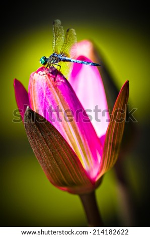 Dragonfly on a Beautiful Flower